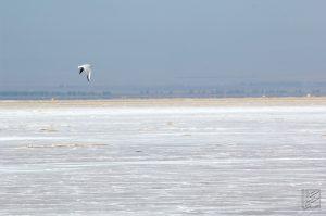نمونه ای از پرندگان دریاچه حوض سلطان