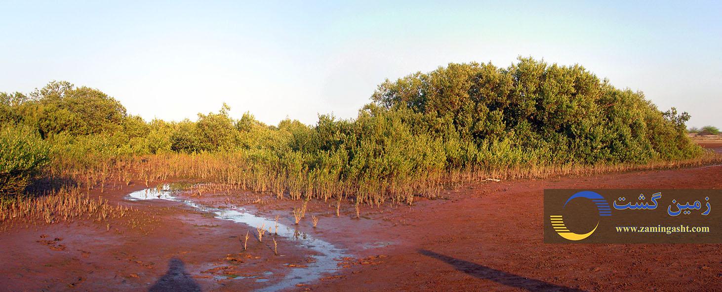 جنگل های مانگرو (جوامع حرای جزیره هرمز)